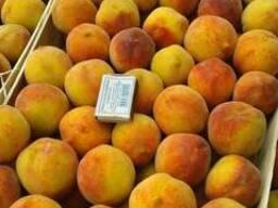Продам персик 1,5 за кг. 375 44 755 66 44