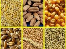 Продам пшеницу фураж РБ