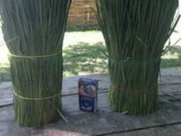 Продам траву зубровка