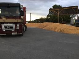 Продам зерно. Пшеница, ячмень, овёс , кукуруза, Шрот гранулы