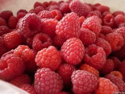 Продажа ягоды малины