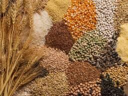 Продажа зерна фуражного и продовольственного