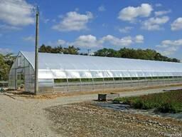 Промышленные, профессиональные, фермерские теплицы. - фото 5