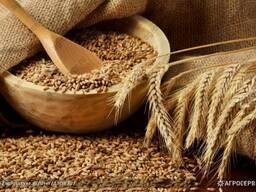 Пшеница фуражная , Рожь, Ячмень, Овёс, Шрот,
