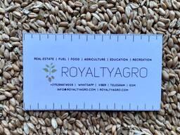 Покупаем: пшеница 3 | рожь | ячмень | кукурузу, предоплата, самовывоз.