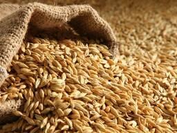 Пшеница, ячмень, кукуруза, тритикале, овес, рожь