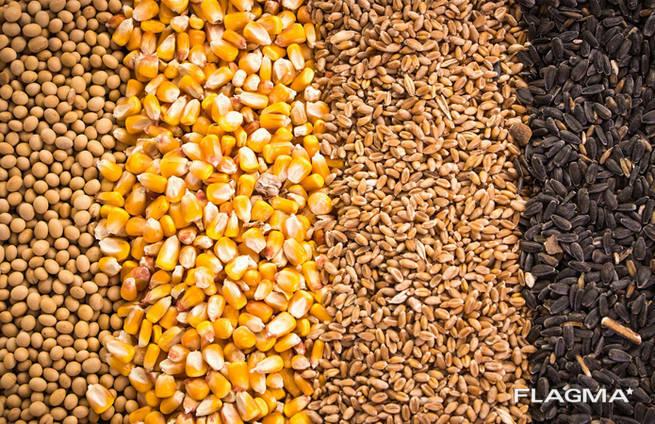 Пшеницу, ячмень, тритикале, овес, кукурузу
