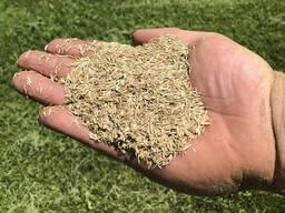Распродажа семян газонных трав - Дания