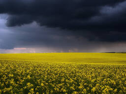 Куплю зерно фуражное / новый урожай