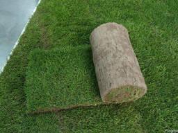Рулонный газон. Укладка рулонного газона.