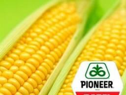 Семена Гибрида кукурузы Pioneer П8521 (P8521)
