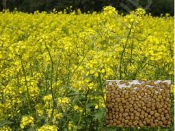 Семена горчицы.