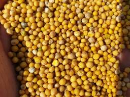 Семена горчицы белой, .