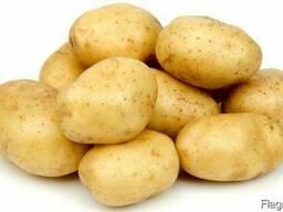 Семена картофель