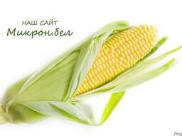 Семена кукурузы MTI-195 MRF ( Молдова)