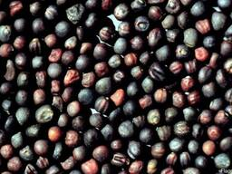 Семена озимого рапса репродукция: супер элита