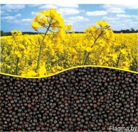 Семена ярового рапса гефест