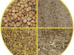 Семена злаковых трав
