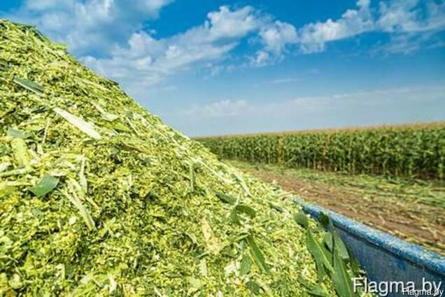 Силос кукурузный