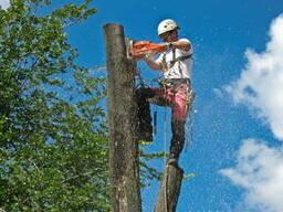 Спилим дерево любой сложности. обрезка сада, уход за деревьями. побелка обрезка ветвей.