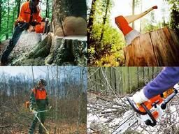 Спилить дерево , обрезать ветви, расчистить участок