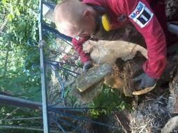 Спилить дерево по частям, с завешиванием или целиком - фото 4