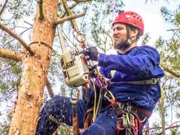Поможем быстро и аккуратно спилить дерево без ущерба