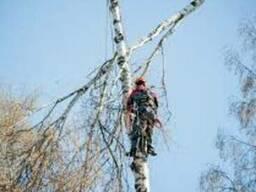 Спилка деревьев