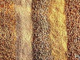 Сушка и очистка семян сельскохозяйственных культур