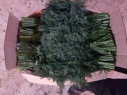 Свежая зелень из Узбекистана