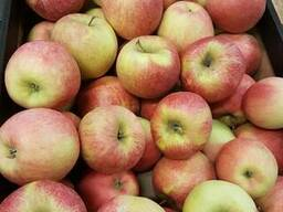 Свежие яблоки, сливы, груши и овощи