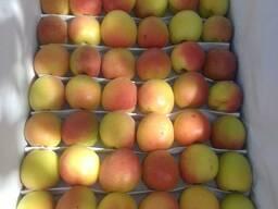 Свежий абрикос из Узбекистана - photo 3