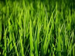Травосмесь для Озеленения