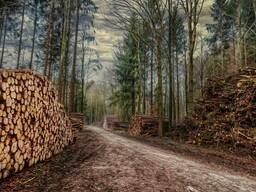 Требуются услуги вывозке леса на промсклад Минская область