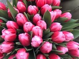 Тюльпаны голландские