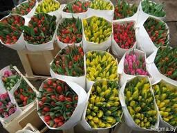 Тюльпаны оптом к 8 марта по ценам производителя