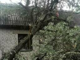 Удаление аварийно-опасных деревьев