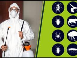 Уничтожение клопов, тараканов и других насекомых.