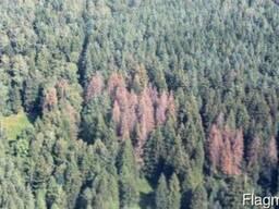 Услуги по лесозаготовкам