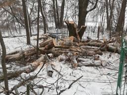 Валка деревьев на кладбище
