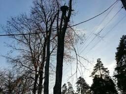 Валка деревьев, услуги промышленного альпинизма, работы на в