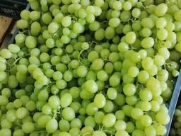 Виноград оптом - от производителя Египет