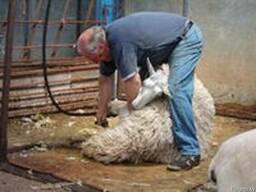 Все для стрижки овец