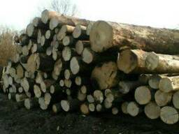 Вывозка древесины на промсклад
