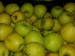 Яблоки - фото 4