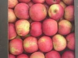 Яблоки белоруские польских сортов