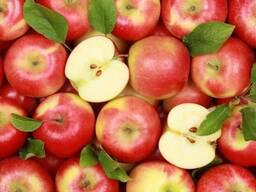 Яблоки для пром переработки