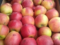 Яблоко оптом 1 и 2 сорта, также социальное и на переработку
