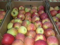 Яблоки Польша - фото 2