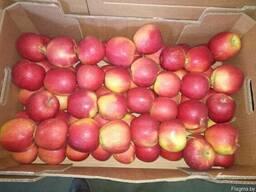 Яблоки Польша - фото 3